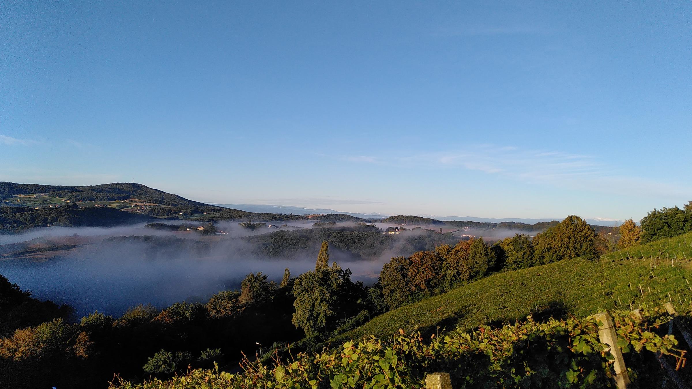 Im Herbst füllt sich das Tal unter der Kapfensteiner Kirchleiten oft mit Nebel. Vom Weingut Winkler-Hermaden zeigt sich dieses Spektakel oftmals am Vormittag.